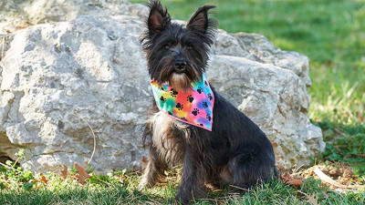 Reversible-Dog-Bandana.jpg